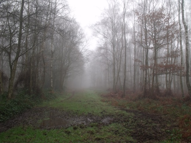 Surrey woods near Walton on the Hill
