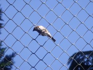 Sparrow on Top