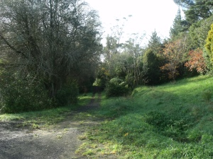 Gum Grove path