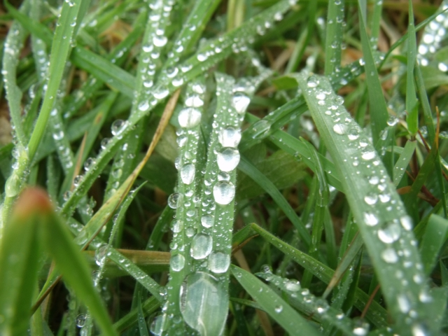 Water on grass