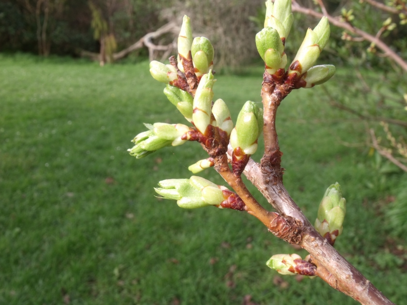 Bursting buds
